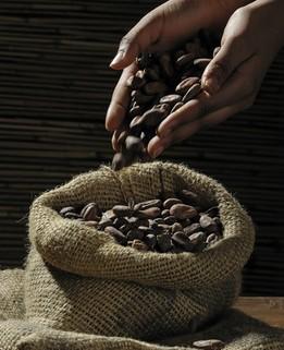 Fève de Cacao Maison d'hôtes Rhone