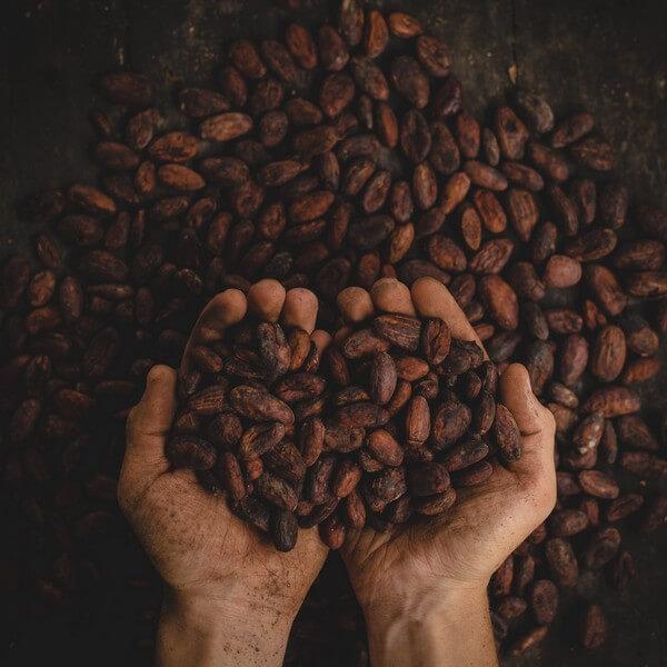 Histoire du Cacao Séminaire Rhône