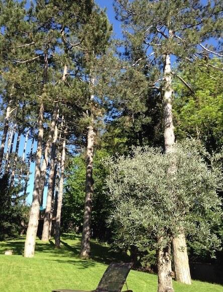 Maison hote arbres centenaires Rhone