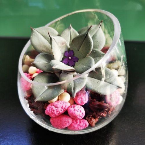 Trompe oeil Plante Succulente Chocolat